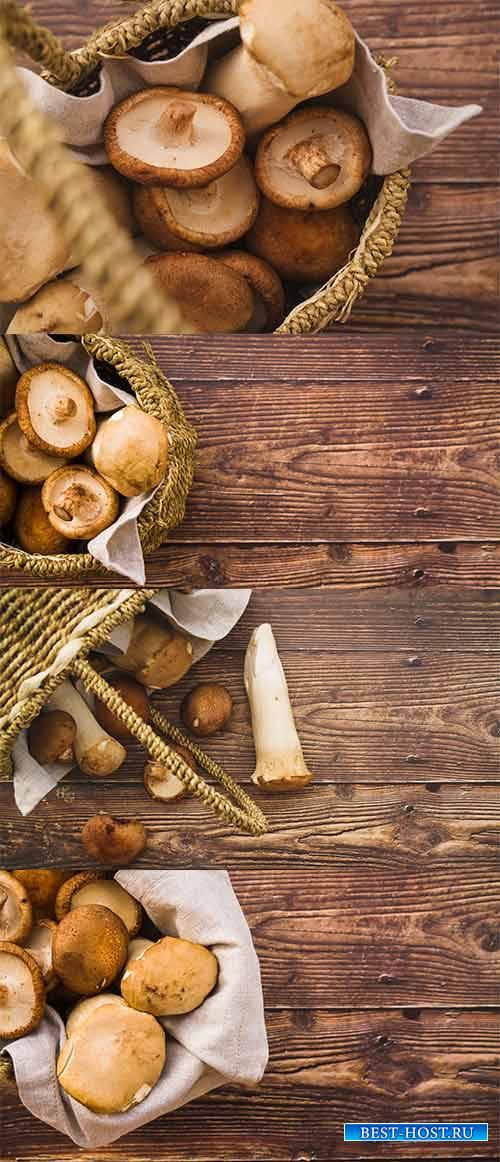 Грибы - Растровый клипарт / Mushrooms - Raster clipart