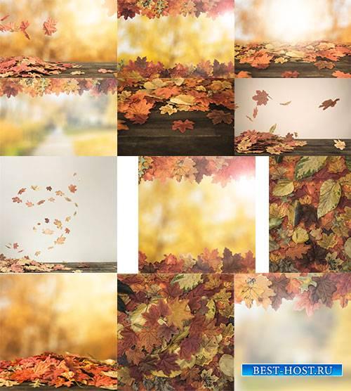 Осенние фоны с жёлтыми листьями / Autumn backgrounds with yellow leaves