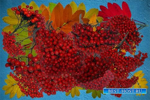 Клипарт Осенние листья и плоды рябины