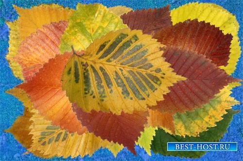 Клипарт Осенние листья лиственных деревьев часть вторая