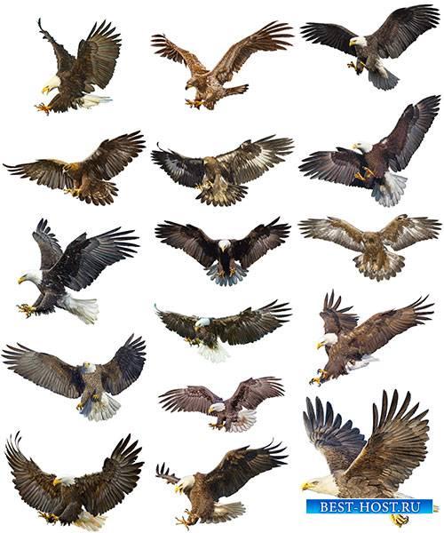 Птицы - Векторный клипарт / Birds - Vector Graphics