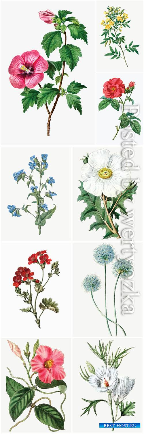 Set of beautiful blooming vector flowers # 2