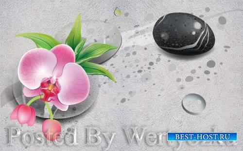 3D psd models modern fresh stone flower tv background wall