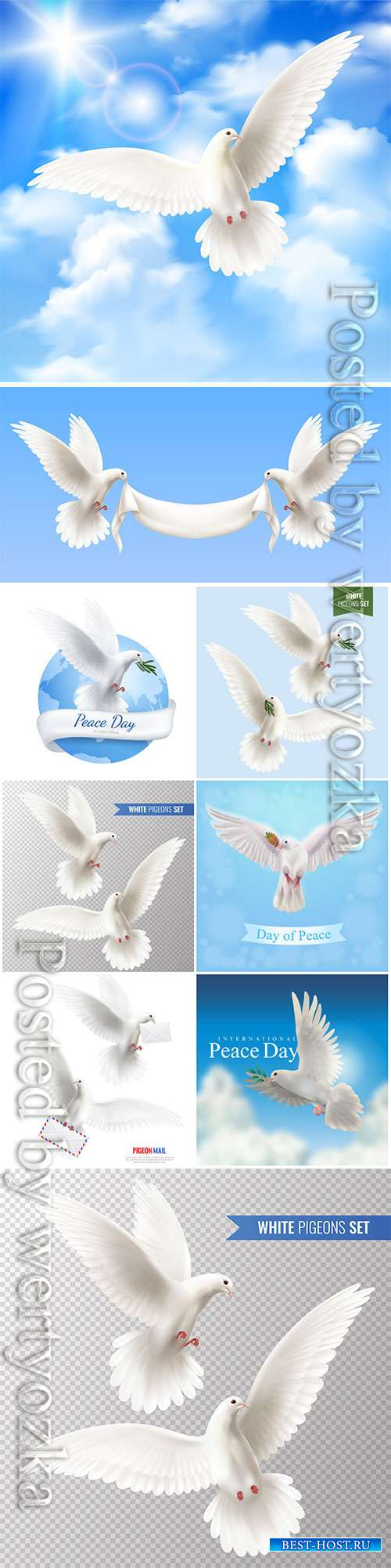 White pigeons vector set