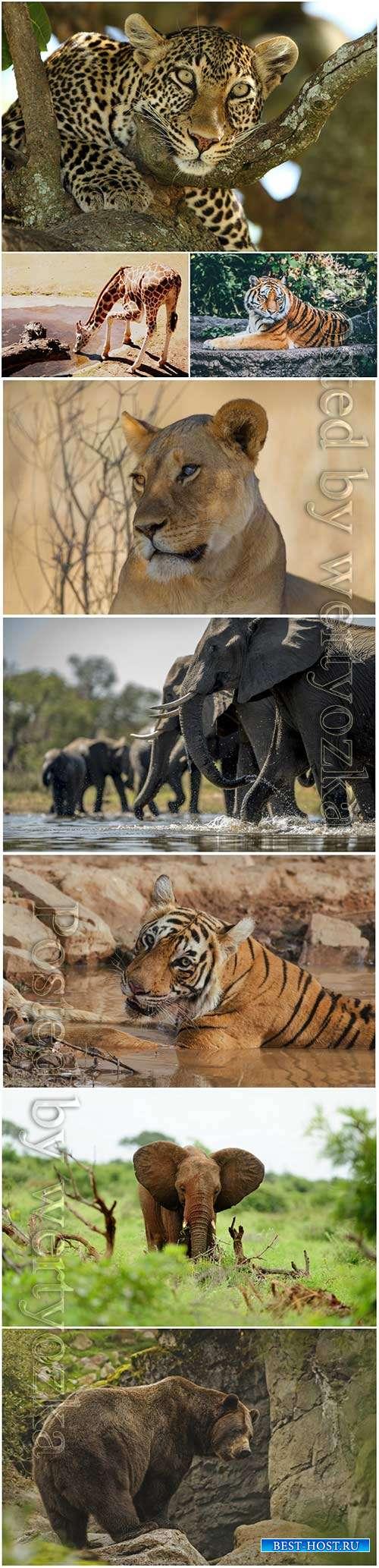 Animals, tiger, elephant, leopard, bear